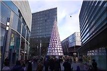 SJ3490 : Christmas tree in Paradise by Richard Webb
