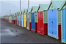 TQ2704 : Splash of colour by David Martin