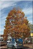 SX9066 : Autumnal tree, Hele Cross by Derek Harper