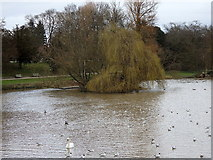 SP3265 : River Leam, Leamington by Rudi Winter