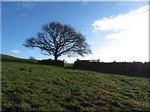 ST0084 : Tree on Mynydd Meiros by Gareth James