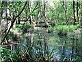 TQ7920 : Flooded woodland between Holman Wood and Ward's Wood by Patrick Roper