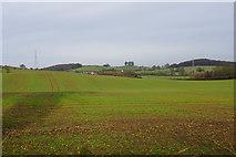 SK1401 : Emerging crop near Brockhurst Farm by Bill Boaden