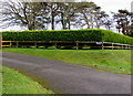 SN1106 : Evergreen hedge at the edge of Evening Star Farmhouse, Pentlepoir by Jaggery