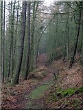 NY9650 : Footpath in Nancy's Plantation by Andrew Curtis
