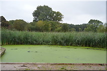 TQ2668 : Wetlands, Morden Hall Park by N Chadwick