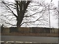 SU8888 : Large tree on Marlow Road, Well End by David Howard