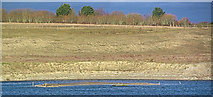 """SP9314 : """"Big Paddy"""" has reappeared at College Lake by Chris Reynolds"""