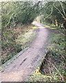 SP3879 : The Sowe Valley footpath through a blackthorn thicket, Walsgrave, east Coventry by Robin Stott