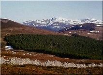 NO1795 : Moor, forest and Lochnagar by Alan Reid