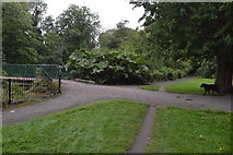 TQ2667 : Wandle Trail, Ravensbury Park by N Chadwick