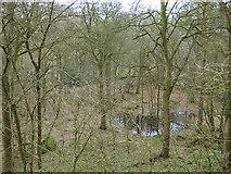 SE1039 : Holme House Wood, Bingley by Stephen Craven