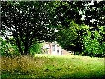 TQ2688 : The Towers, a Glimpse Through an Overgrown Garden by Nigel Mykura