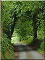 SN5557 : Narrow lane in Trefilan, Ceredigion by Roger  Kidd