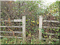 SJ9486 : Overgrown footpath by Stephen Craven