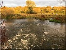SU4726 : River Itchen by Shaun Ferguson