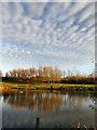 SE4121 : Mackerel Sky by derek dye