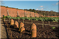 TQ4551 : Kitchen garden, Chartwell by Ian Capper