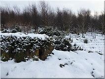H5172 : Snow, Cloghfin by Kenneth  Allen