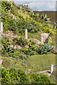 SW3822 : Sub-tropical planting, Minack Theatre by Ian Capper