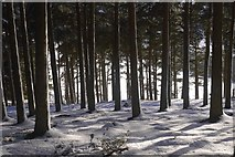 NT2840 : Mature conifers, Glentress Forest by Richard Webb