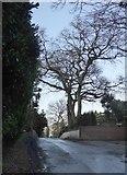 TQ2255 : Ebbisham Lane by Stefan Czapski
