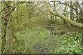 SO6787 : Pond, Park Coppice by Richard Webb