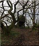 SK2563 : Trees and Stone by Chris Thomas-Atkin