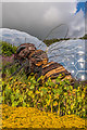SX0454 : Giant bee, Eden Project by Ian Capper
