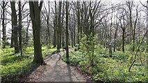 SE5784 : Rievaulx Terrace Woodland by Alan Walker