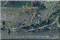 ST1879 : Cormorants by Roath Park lake by Robin Drayton