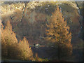 NY3114 : Larches above Thirlmere by Karl and Ali