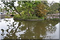 TQ2764 : Island, Carshalton Upper Pond by N Chadwick