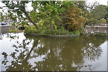 TQ2764 : Island, Carshalton Upper Pond by N Chadwick