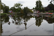 TQ2764 : Ford, Carshalton Upper Pond by N Chadwick