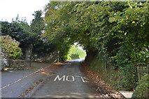 SX4061 : Lane in Botusfleming by N Chadwick