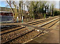 SJ3156 : Passengers may cross the line here, Cefn-y-bedd station, Flintshire by Jaggery