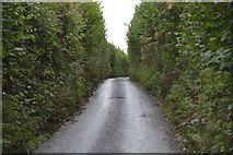 SX4061 : Lane to East Town Farm by N Chadwick