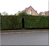 ST3090 : Gate in an evergreen hedge, Laurel Crescent, Malpas, Newport by Jaggery
