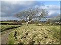 SY9977 : Tree by the Priest's Way by David Smith