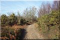 SU8936 : The Greensand Way on Hindhead Common by Des Blenkinsopp