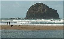 SX0486 : Dogs on the beach, Trebarwith Strand by Derek Harper