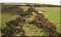 SX0583 : Cornish hedge near Tregonnick by Derek Harper