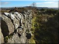 NS3778 : Dry-stone wall with throughs by Lairich Rig