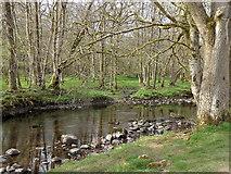SN9211 : Broadleaf woodland by the Afon Mellte by Rudi Winter