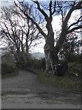 SX7381 : Tree at the entrance to Torhill Farm by David Smith