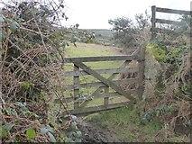 SX7282 : Gateway to Easdon Tor, Langdon by David Smith