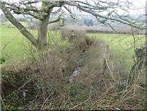 SX7283 : Stream flowing towards Bowden Farm by David Smith