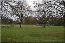 TL5050 : Babraham Park by N Chadwick