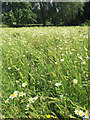 SP2964 : Sown wildflower mix in St Nicholas Park, Warwick 2017 by Robin Stott